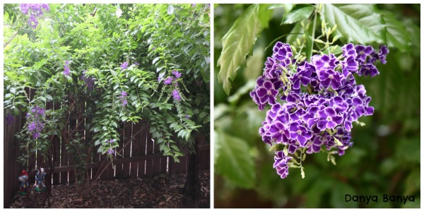 Purple flowering plant