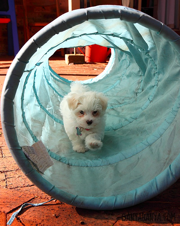Puppy tunnel