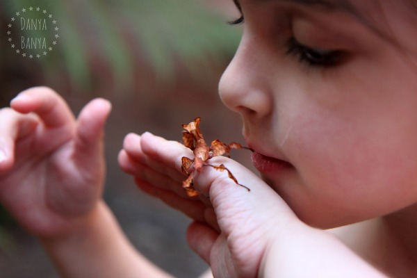 Stick insects make great pets