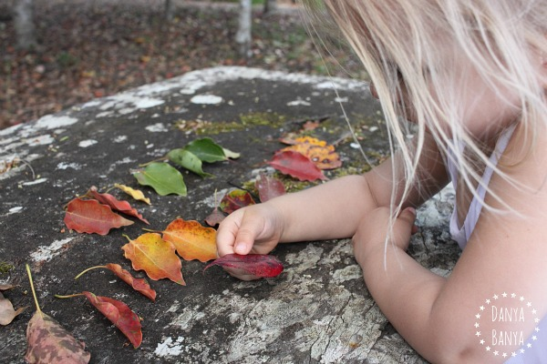 Gathering, studying and sorting leaves