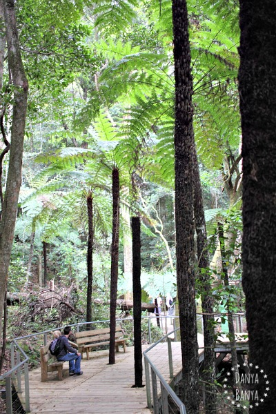 Bushwalks (and rest stops) around Scenic World, Blue Mountains, Australia