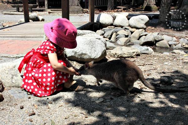 Travelling with kids Feeding a little wallaby (with a joey in her pouch) at Port Douglas Wildlife Sanctuary