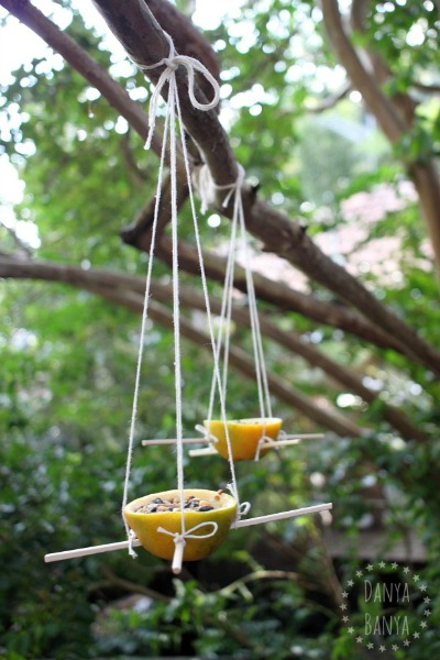 DIY bird feeders using orange skin cups for your backyard