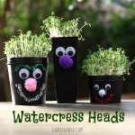 Growing Watercress Hair
