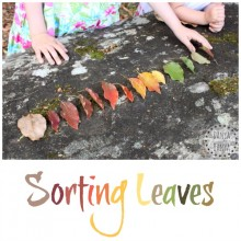 Sorting leaves and enjoying the great outdoors